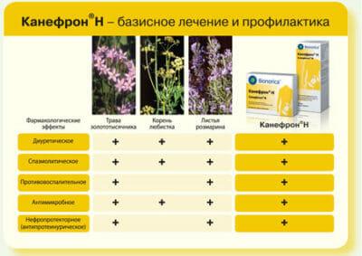 Как принимать канефрон в таблетках до еды или после: инструкция по применению, состав